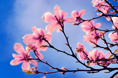 spring acupuncture vancouver bc